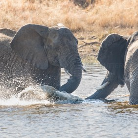 Splashing with trunks!