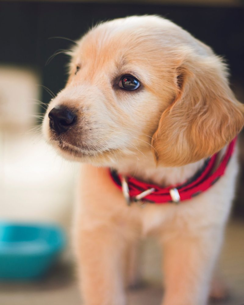 Ready for a Pet? Six Tips for Preparing for Your New Best Friend