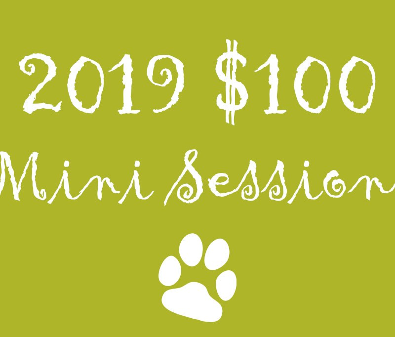 2019 Mini Sessions – $100