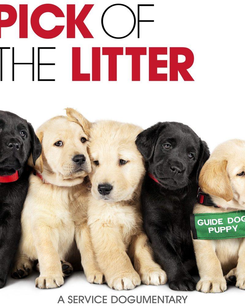 Dog Lover Documentary – Pick of the Litter