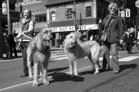 Wolfhounds on Parade