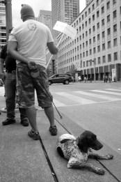 Free Puppy