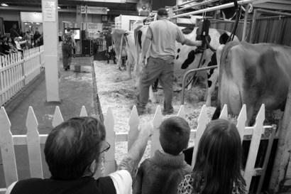 Milking Demo