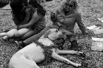 Doobie Dog