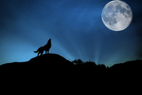 wolf and full moon