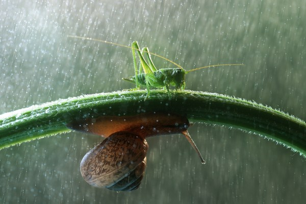 grasshopper and snail in rain