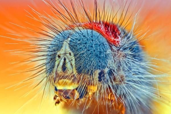 High magnification macro photograph of a caterpillar