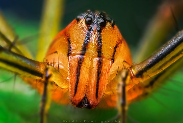 reverse 18-55mm lens high magnification macro photograph of crab spider