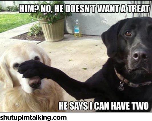 Sup Dawg Shut Up Im Talking
