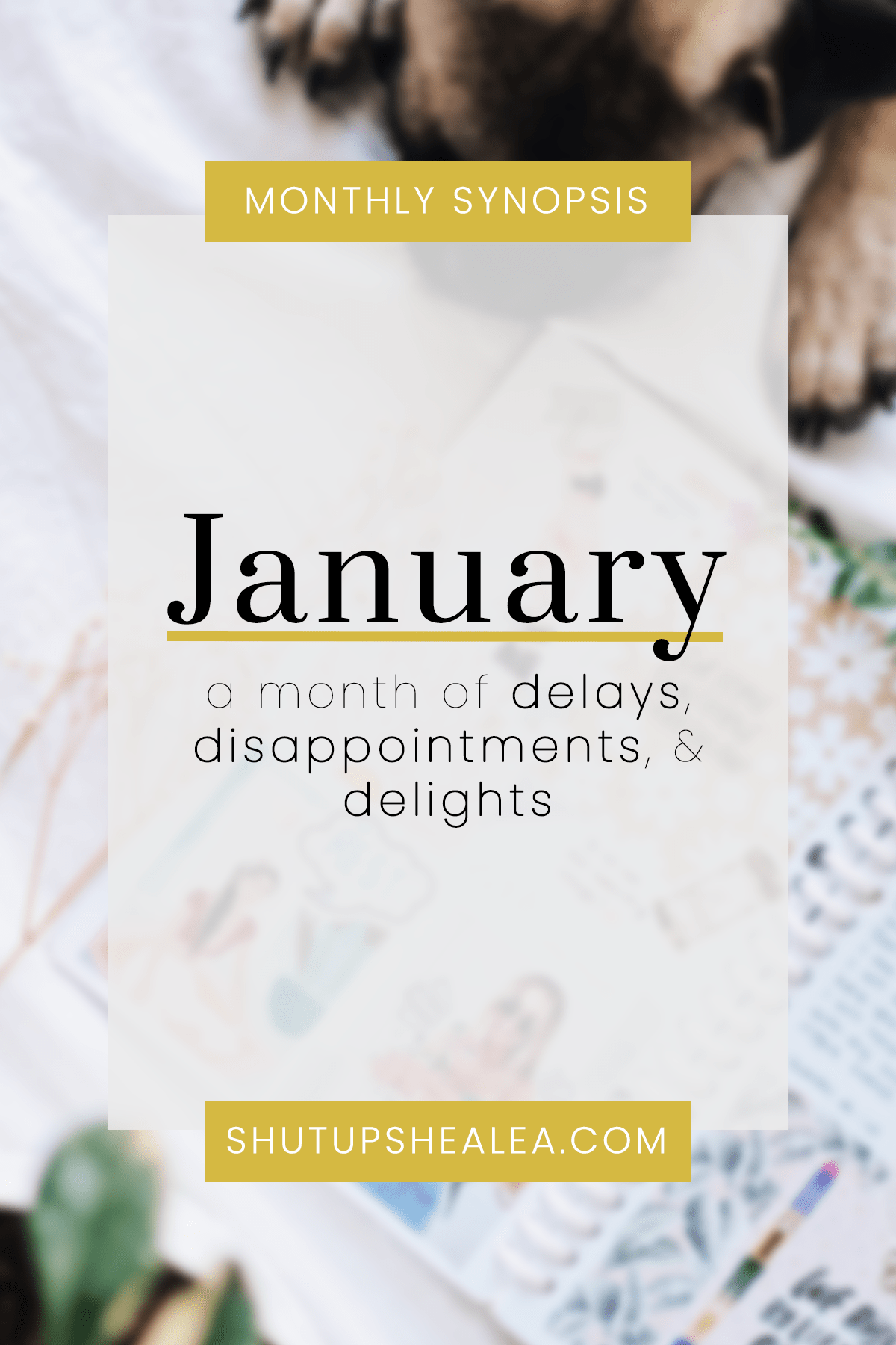 Monthly Synopsis: A January of Delays & Delights