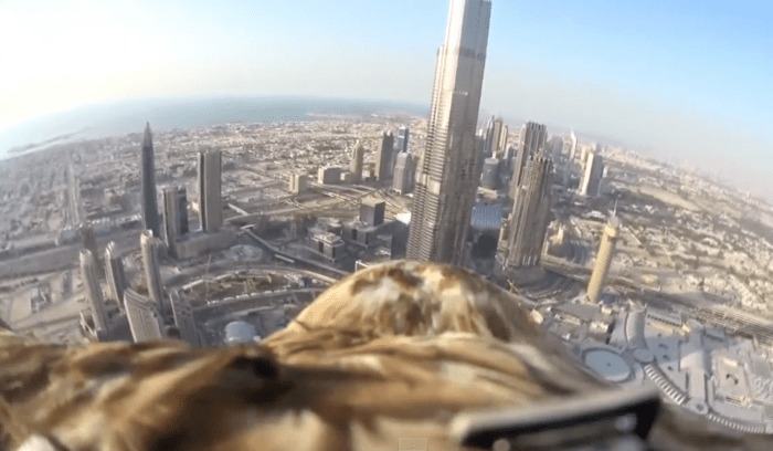 Eagle flight over Dubai