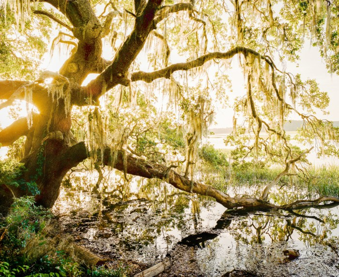 Beautiful and Hidden – Low Country, SC – Shot on Film