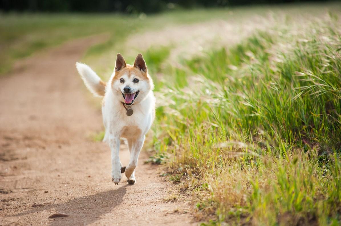 Toni the happy runner.