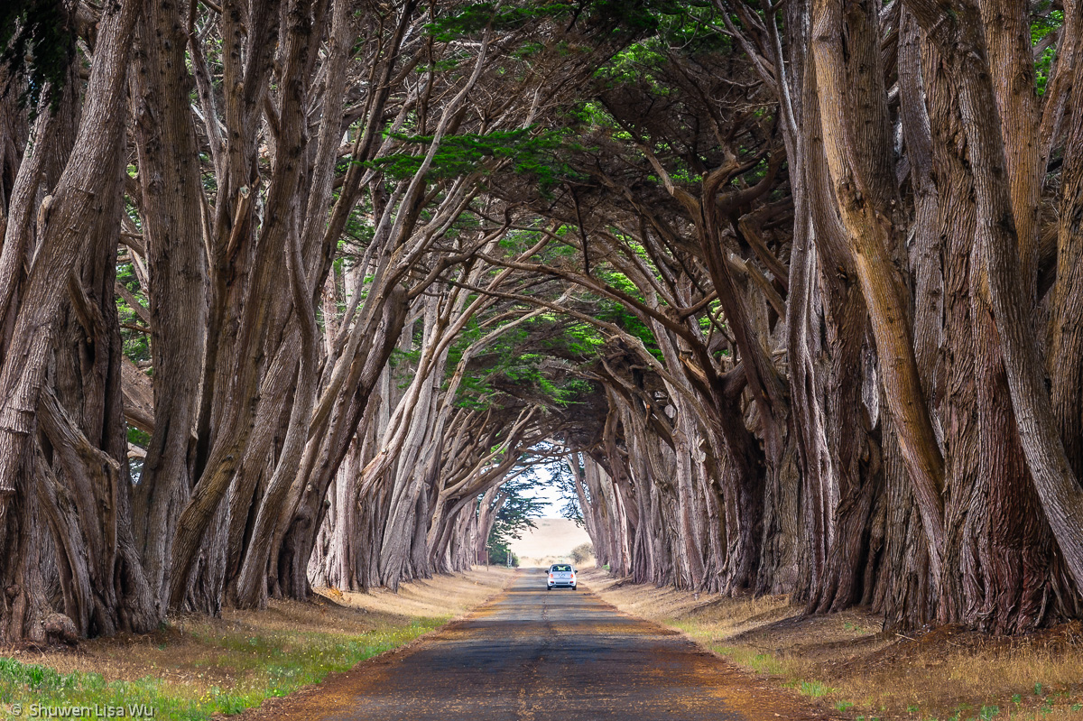 Point Reyes Cypress Tunnel