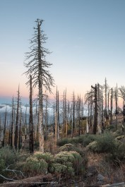 The burnt slopes of Cuyamaca Rancho State Park at dusk.
