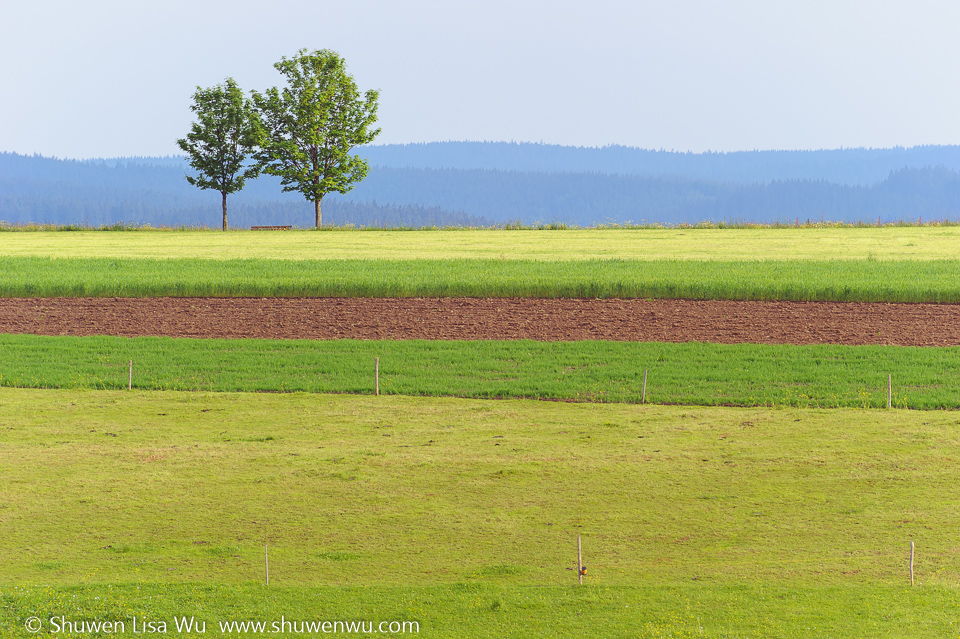 Striped Landscape -- near St. Peter, Black Forest region, Germany. June 2014.