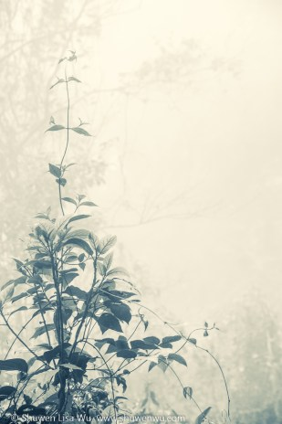Tree Seedling in Fog