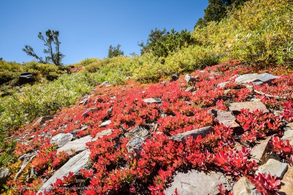 Small vegetation in autumn colors, 20 Lakes Basin, Hoover Wilderness, California, September 2016.