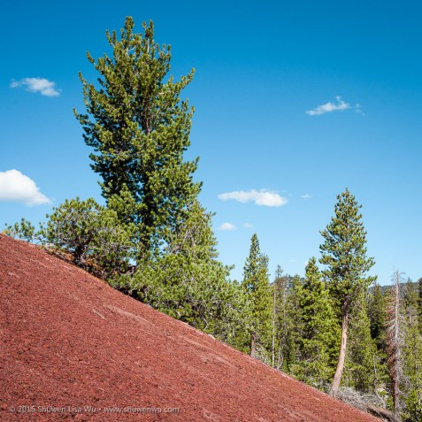 Trees and red pumice at the Red Cones, Mammoth Lakes, California, September 2016.