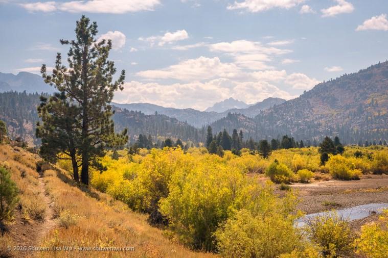 Trail at Leavitt Meadows, Bridgeport, California, September 2016.