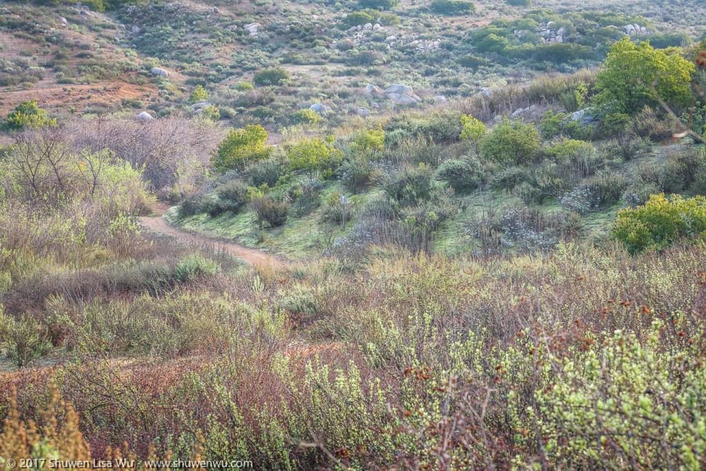 Pastel colors as the landscape reawakens after winter rains at Lake Hodges, Rancho Bernardo, San Diego County, California. December 2016.