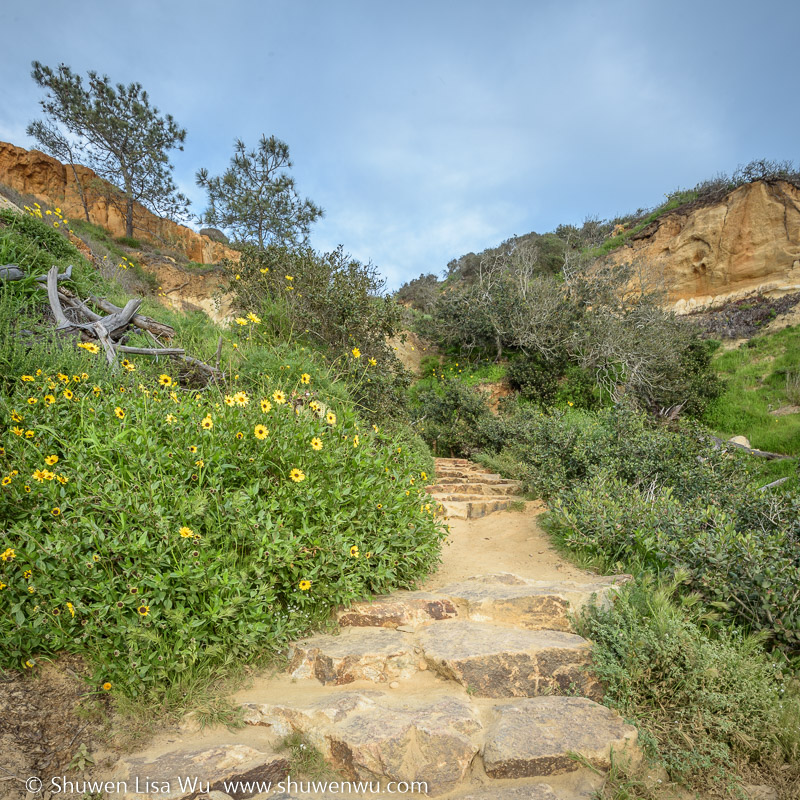 Parry Grove Trail/Torrey Pines in Spring, San Diego, California. March 2017.