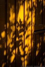 Tree Shadow on Wooden Wall