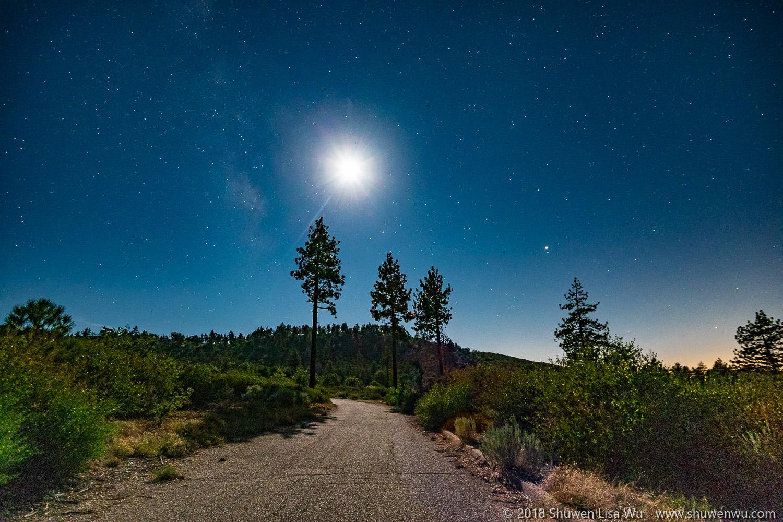 Jeffrey Pines and Moon during a Moonlight Night at Mt. Laguna