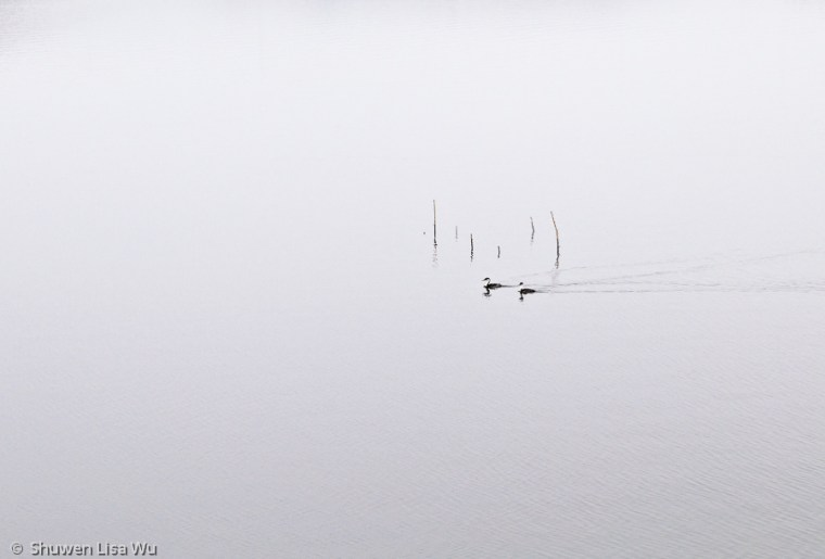 Minimal photo of birds at Lake Hodges, San Diego