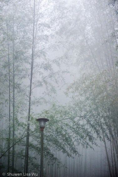 Bamboo Forest at Shan Lin Xi, Nantou County, Taiwan.