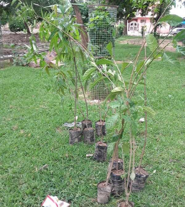 Saplings ready to join the party