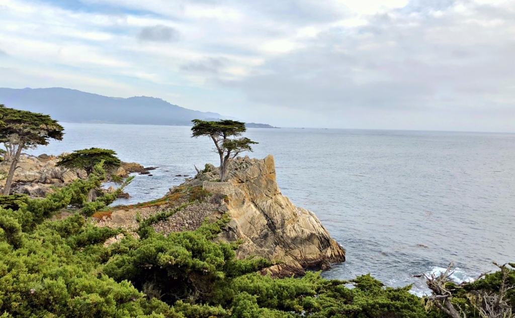 lone Cypress by the sea in the 17 mile drive