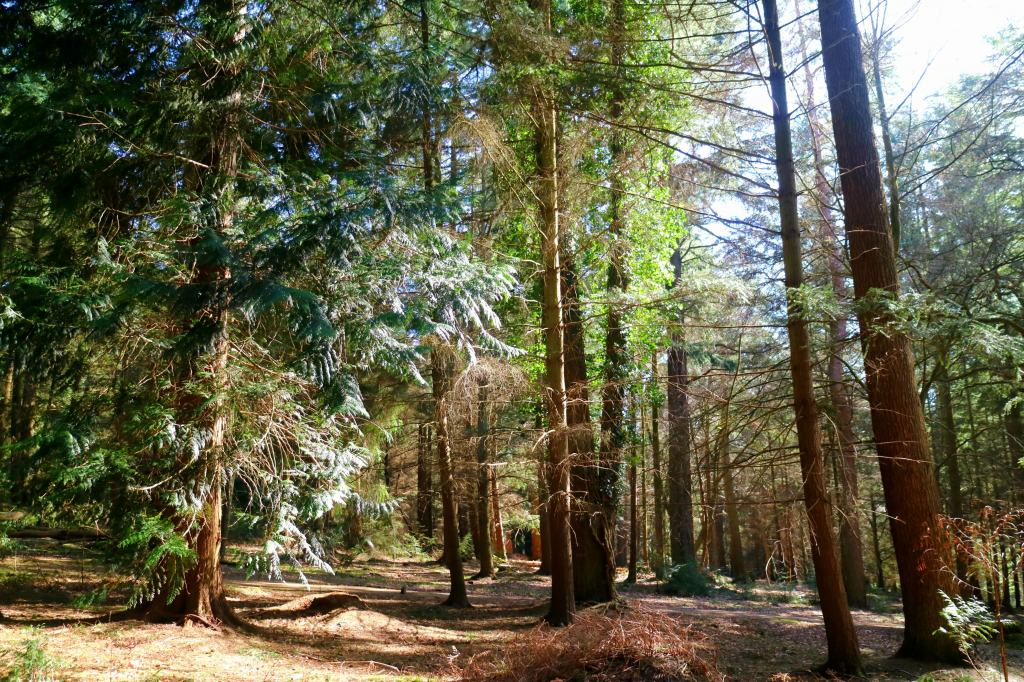 Trees of The New Forest