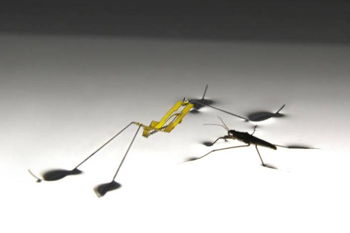A robot version of a water strider faces off against the real insect in a Seoul National University lab.