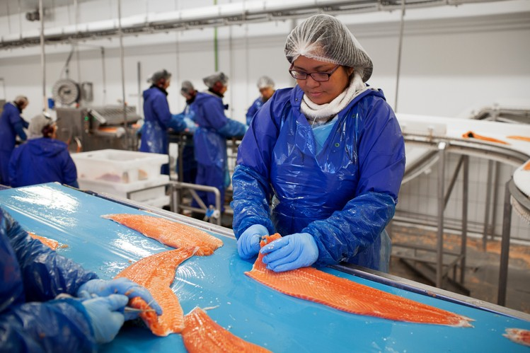 Fresh filleted salmon is processed by a worker at the Bakkafrost factory in Glyvrar, Faeroe Islands.