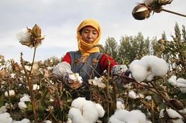 [cotton1015]
