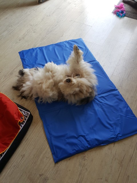apetit predlagam iztezanie tapis rafraichissant pour chien gifi