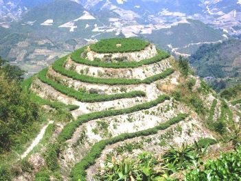 """Tee-Berg"" in Anxi County, Provinz Fujian, China"