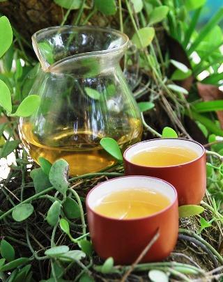 Pai Mu Tan weißer Tee Baum-Gong-Fu-Cha