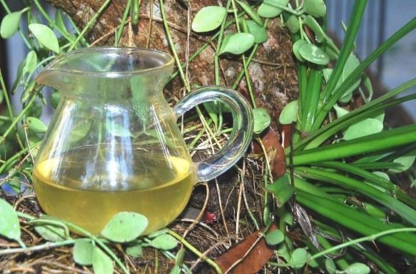 Wilder Grüner Spring Long Jing Tee in meinem Garten