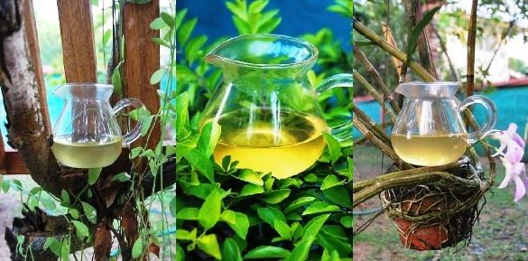 Wild Spring Long Jing Grüner Tee in meinem Garten - Collage