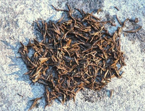 Zhengshan Qingming Jin Jun Mei Golden Eyebrows black tea, wet leaves after infusion nasse Blätter