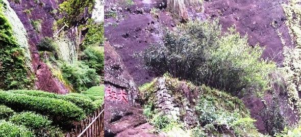 Verbleibende 4 Original Da Hong Pao Teebüsche: Teebüsche und Standort