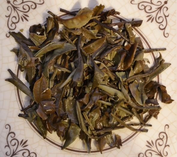 Ancient Tree White Moonlight Weißer Tee von Yunnans alten Teebäumen - nasse Blätter