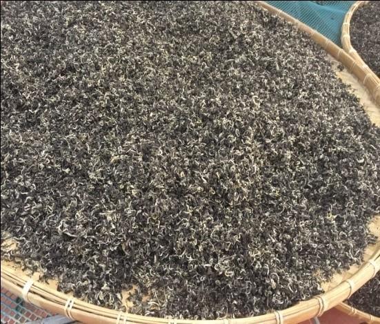 Tra Pai Haop Teeblätter während der Oxidation