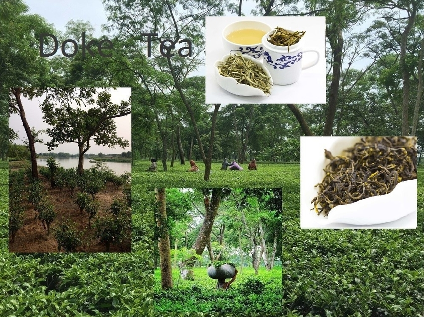 Doke Tea Collage 2