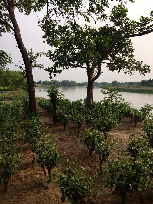 Doke Teegarten, Bihar, Indien: Biodiversität und naturnaher Anbau