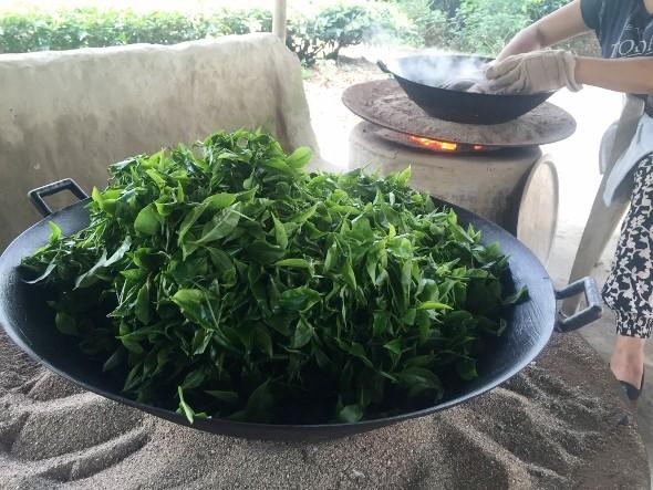 Teeproduktion im Doke Teegarten, Bihar, Indien