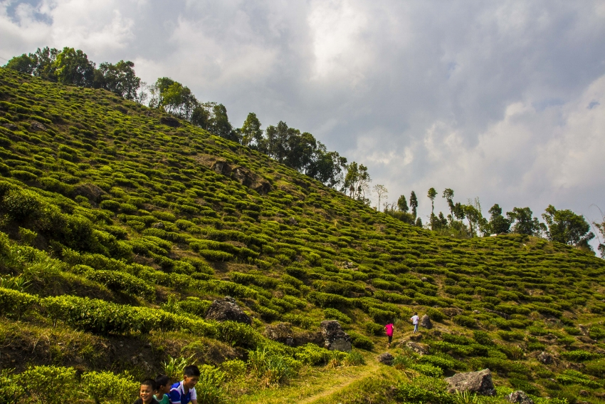 Giddahpahar Tee-Estate, Kurseong Valley, Darjeeling, Nordostindien