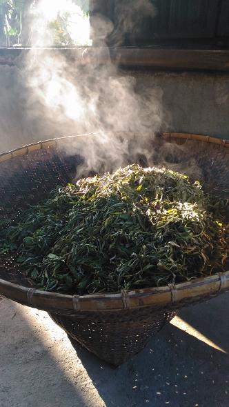 Manuelle Artisan-Teeverarbeitung in Xiengkhouang, Laos